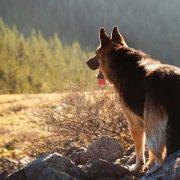 Gdzie z psem w Tatry?