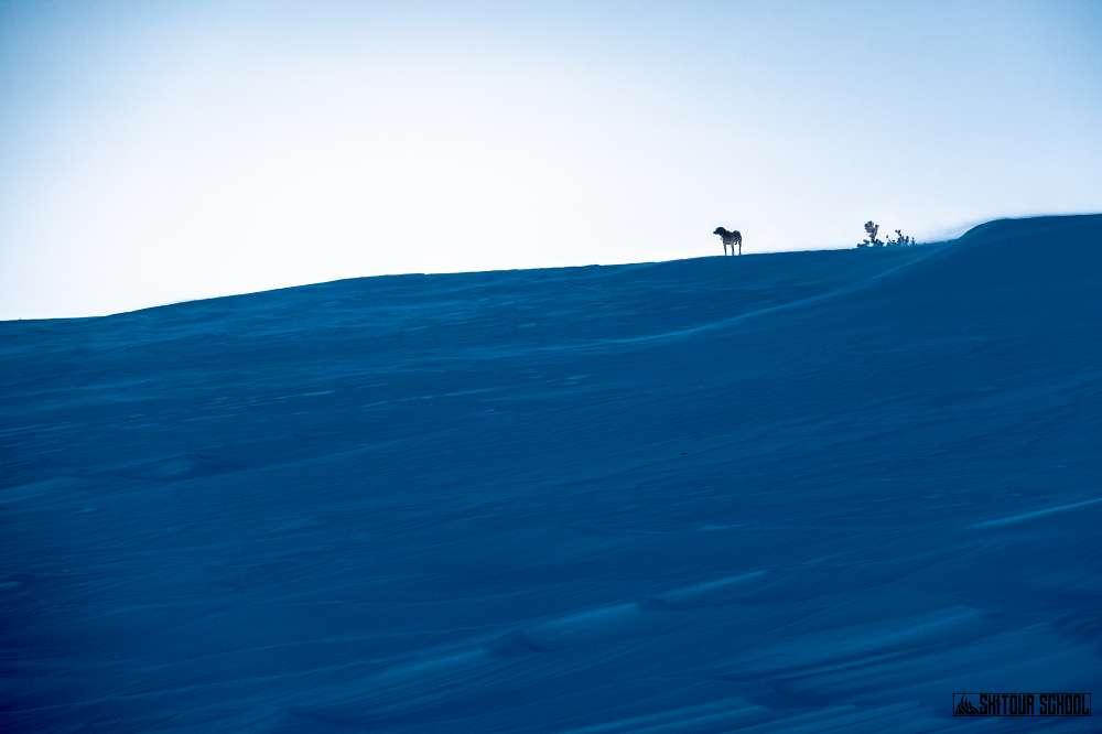 Skitourowanie z czworonogiem 2