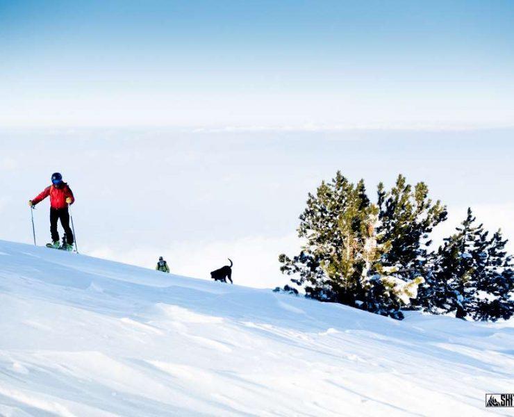 Skitourowanie z czworonogiem