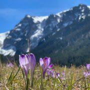 Nareszcie wiosna w Tatrach
